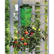 Topsy Turvy Tomato Planter