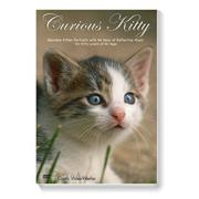 Curious Kitty DVD