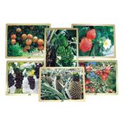 Growing Up Green Healthy Eating Fruit Puzzle Set (set of 6)