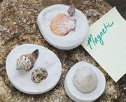 Fossil Shell Magnets Craft Kit  (makes 24)
