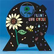 Color-MePlant Life Cycle Spin &#039;N Learn Craft Kit (makes 12)