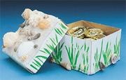 Shell Treasure Boxes Craft Kit (makes 24)