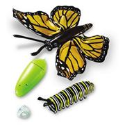 Giant Inflatable Butterfly Life Cycle (set of 4)