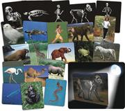What's Inside Animals Cards (pack of 16)