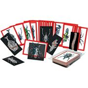 Insect X-Ray and Picture Cards (set of 36)