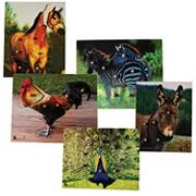 Photo Knob Puzzle Set (set of 5)