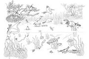 Pond Life Learning Wall�
