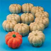 Paper Mache Pumpkin (pack of 12)
